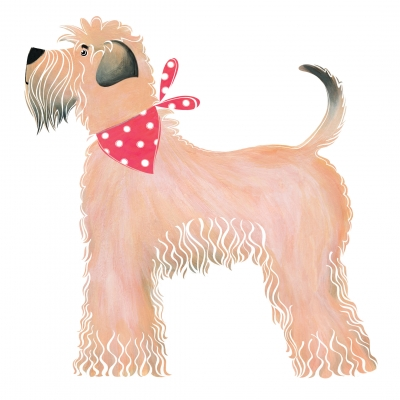 Barnsley The Wheaten Terrier